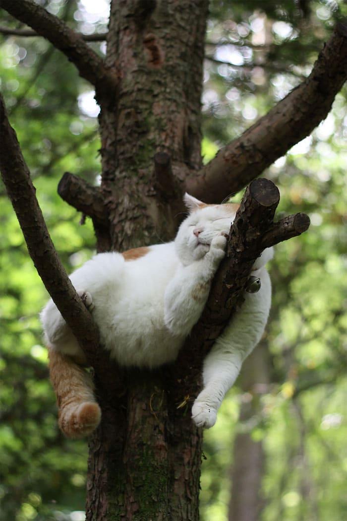 толстый кот спит на дереве