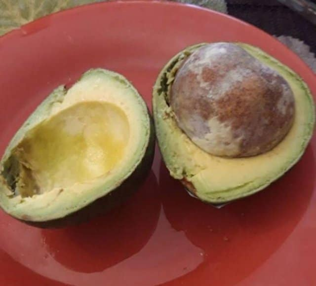 авокадо в разрезе