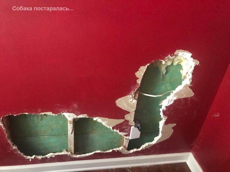 Бывают в жизни огорчения 01.08 ❘ фото Приколы,ekabu,ru,фото
