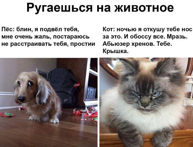 1596410698_prikol-1.jpg