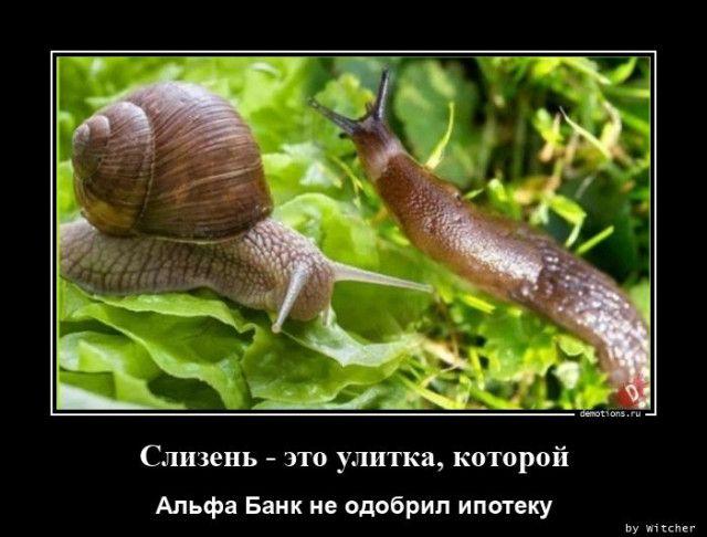 1596697607_demy-7.jpg