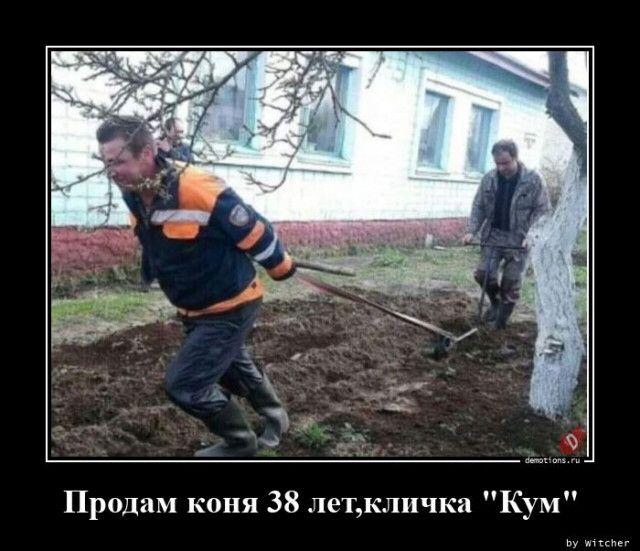 1596611438_demotivatory-13.jpg