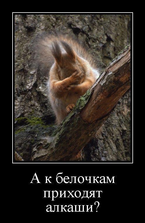 1596697563_demy-5.jpg