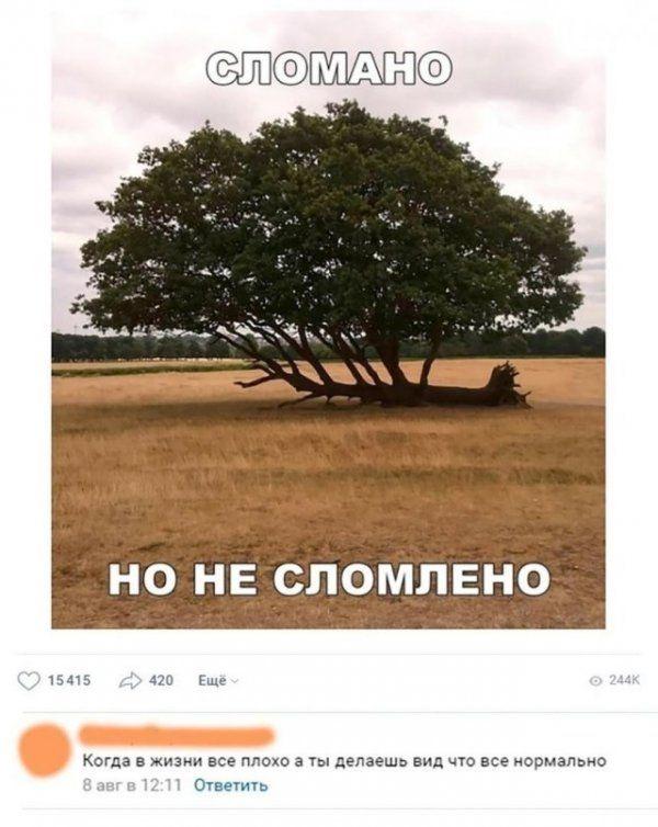 sdavatsya-nelzya-nikogda-kartinki-smeshnye-kartinki-fotoprikoly