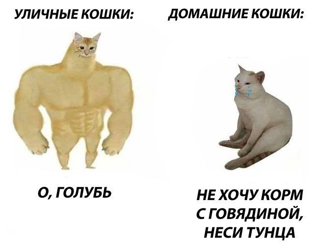 Немного весёлых картинок… Приколы,myprikol,com