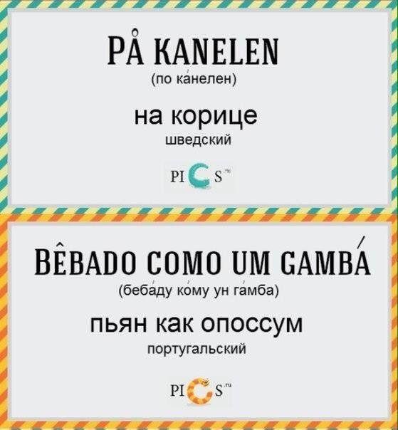 yazykah-raznyh-stelku-kartinki-smeshnye-kartinki-fotoprikoly