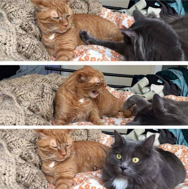Фотки для смеха Приколы,myprikol,com,смех
