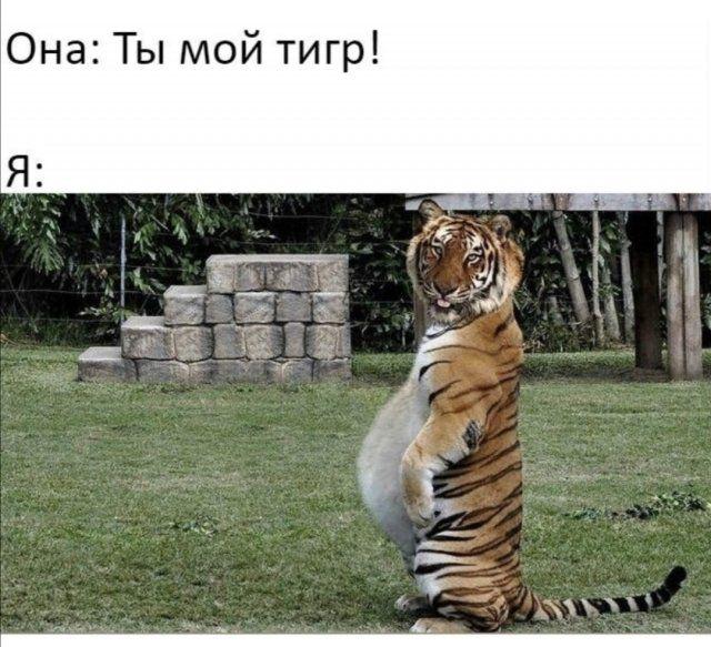 devushek-sovremennyh-shutki-citaty-vkontakte-vkontakte-smeshnye-statusy