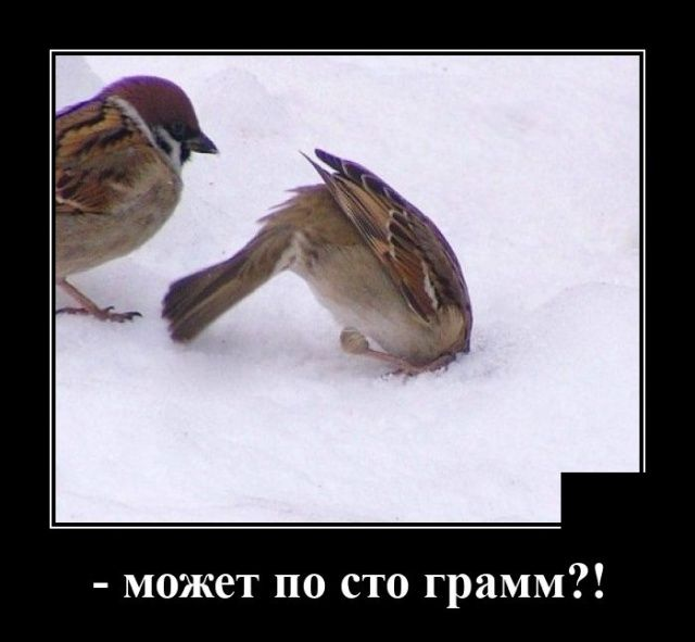 Долгожданная подборка демотиваторов Приколы,myprikol,com