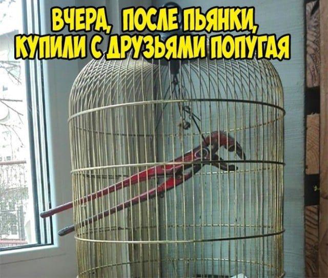 1598159696_kartinki-31.jpg