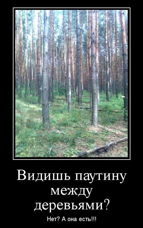 1598598539_demy-8.jpg