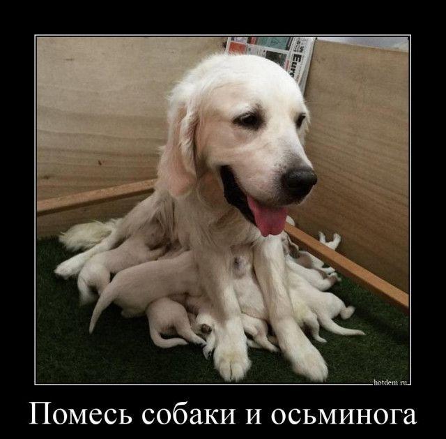 1598512215_demy-16.jpg