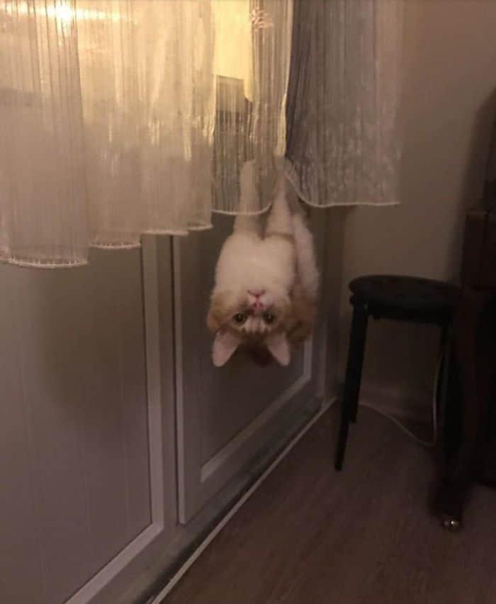 """С ними что-то не так! 15 фото котов, """"вышедших из строя"""" Приколы,Фото,коты,кошки,смешные коты,фото приколы"""