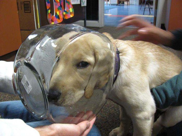 щенок застрял головой в банке