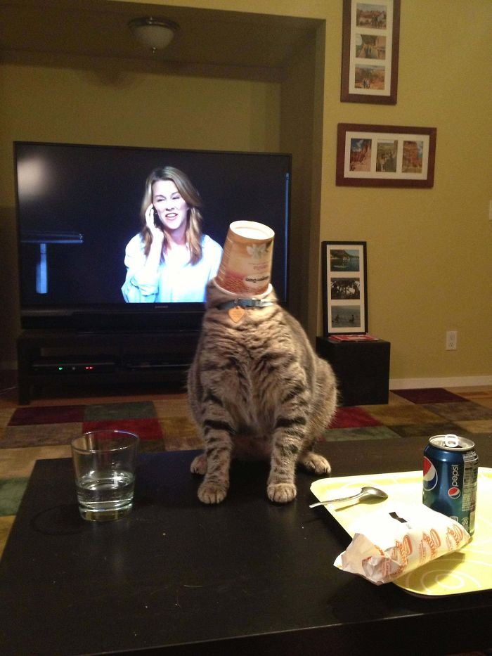 полосатый кот на столе со стаканом на голове