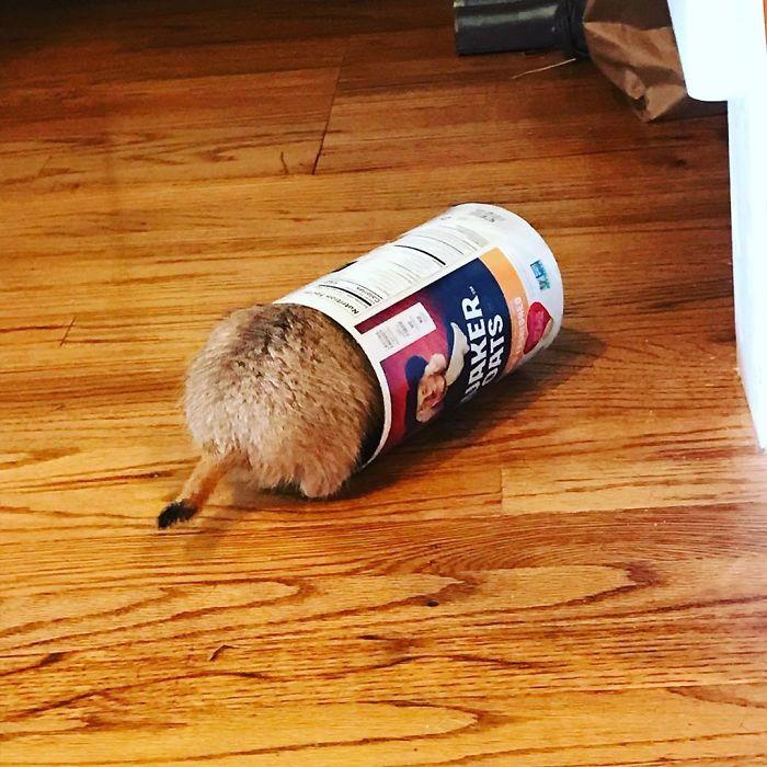 луговая собачка застряла в упаковке с едой