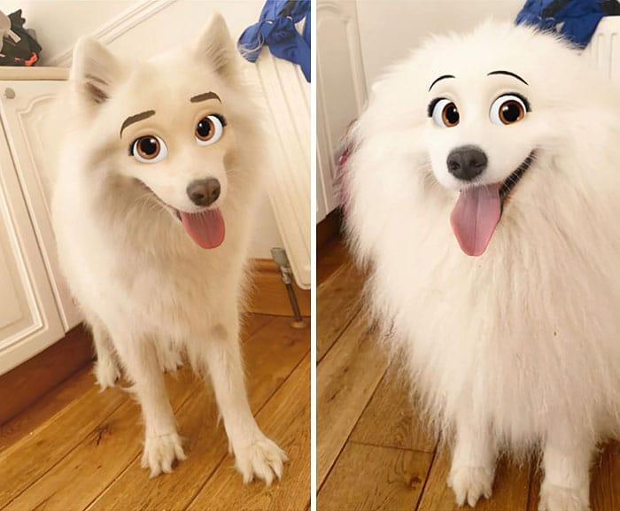 белая пушистая собака