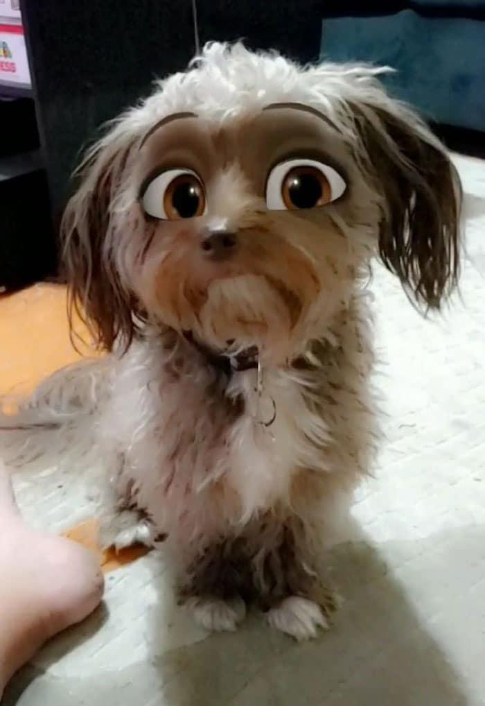маленькая кучерявая собака