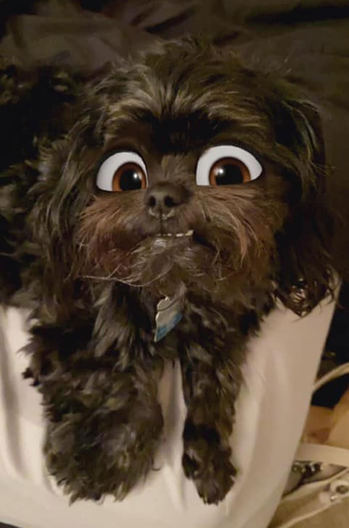 коричневая собака
