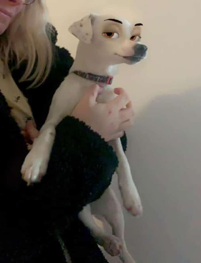 женщина держит на руках белую собаку