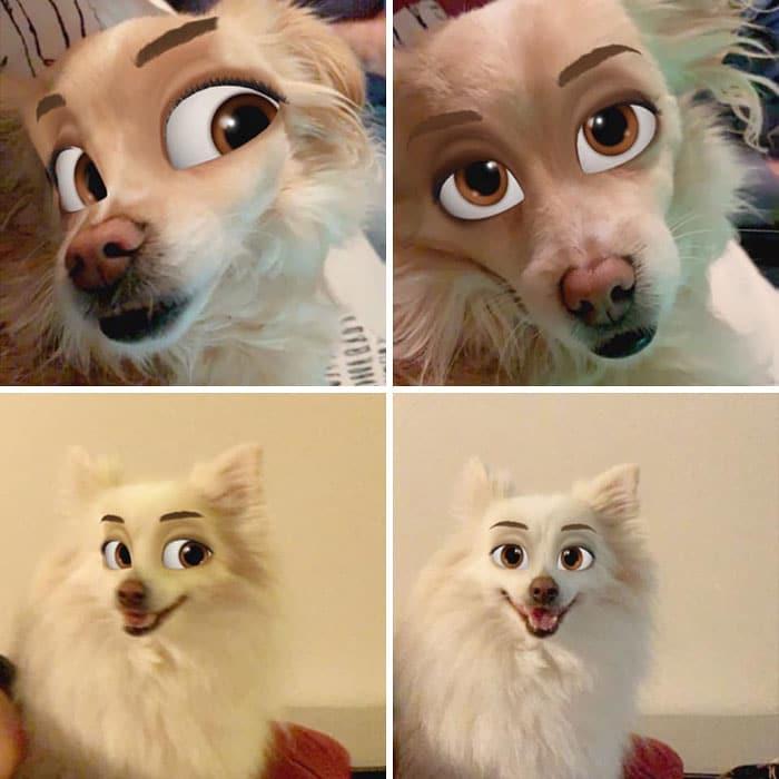 коллаж из четырех фото собаки