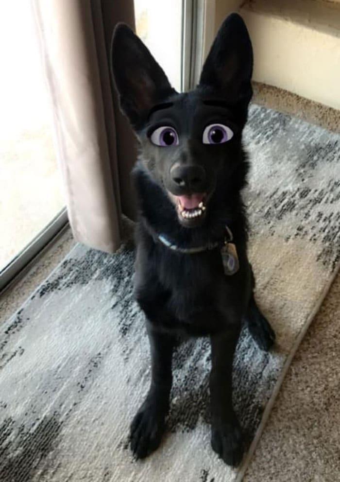 черный пес сидит на полу