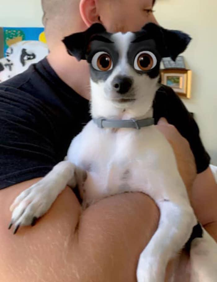 черно-белая собака на руках у хозяина
