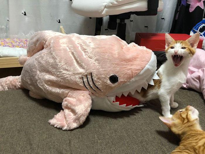 15 фото котов, которые слишком все драматизируют Приколы,Фото,драма,коты,приколы,реакция