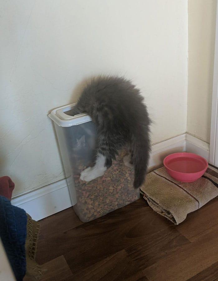 котенок застрял в емкости с кормом