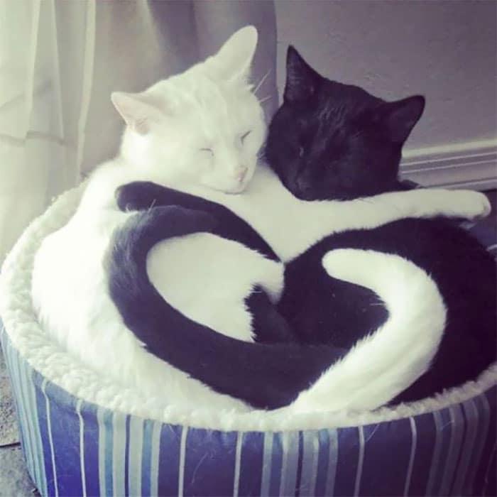 Коты, освоившие парный сон в самых замысловатых позах
