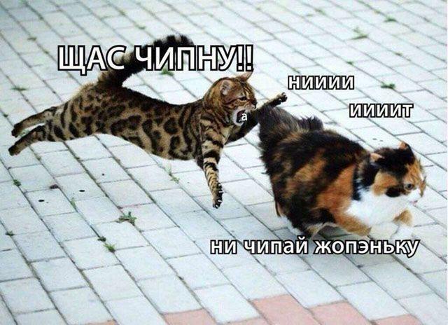 1599002443_prikol-13.jpg