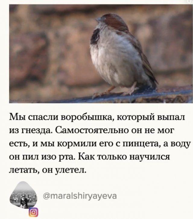 zhivotnym-bede-pomogli-citaty-vkontakte-vkontakte-smeshnye-statusy