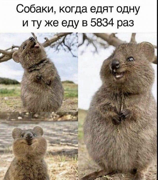 200466_12_trinixy_ru.jpg