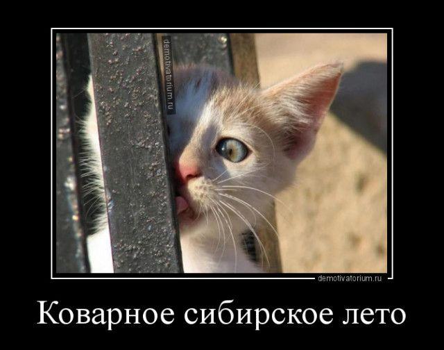 1599633767_demy-1.jpg
