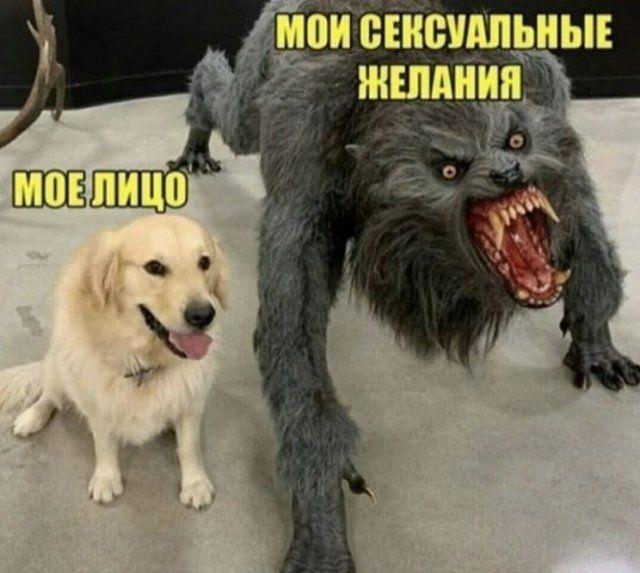 seti-yumor-memy-citaty-vkontakte-vkontakte-smeshnye-statusy