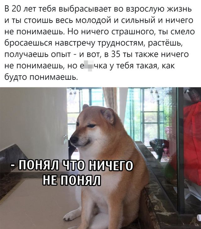 1600331111_podb_31.jpg
