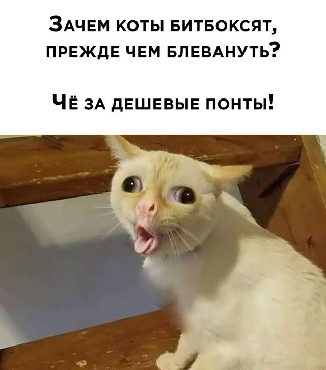 1600425361_prikol-22.jpg