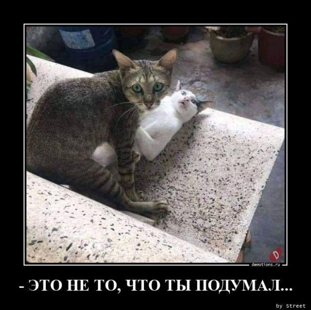 1600844964_demy-17.jpg