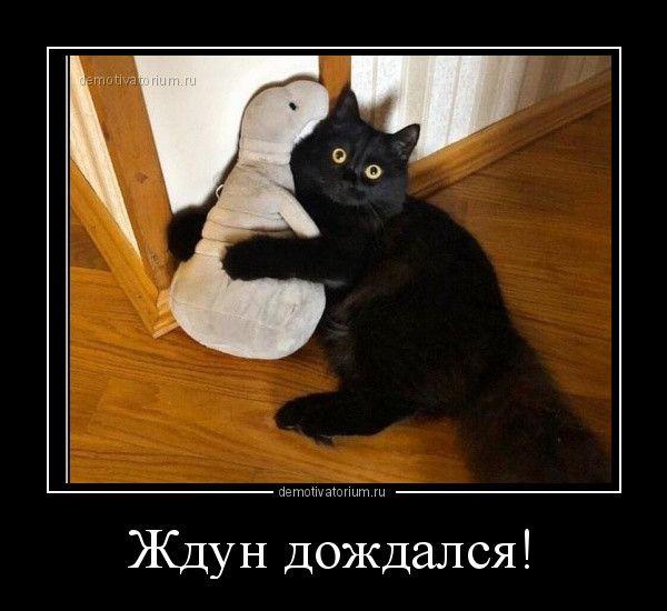 1600844936_demy-11.jpg
