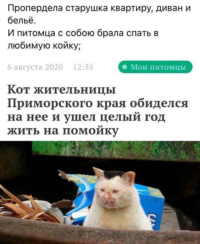 setey-socialnyh-rifmy-citaty-vkontakte-vkontakte-smeshnye-statusy