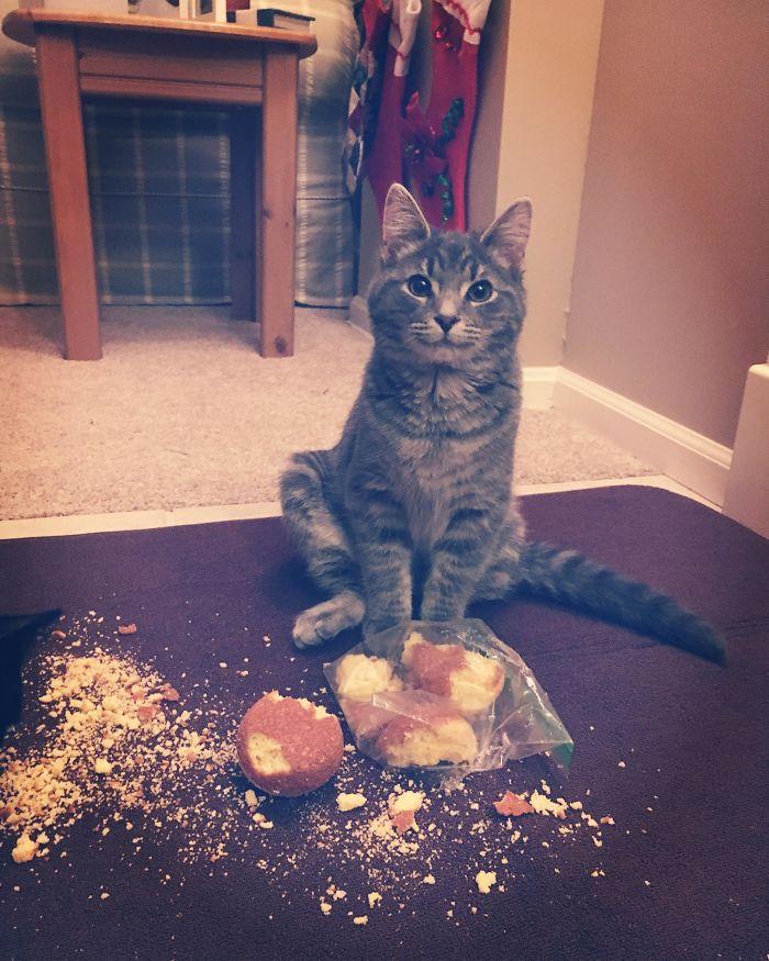 полосатый кот и пакет с кексами