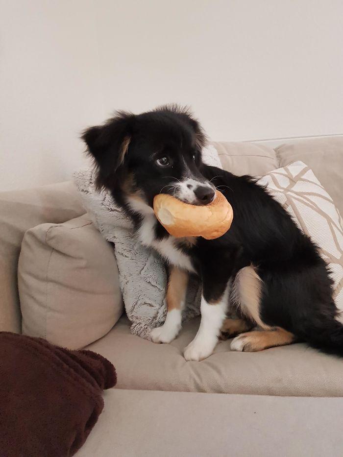 собака с хлебом во рту