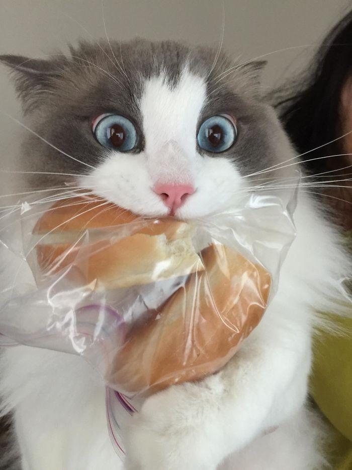 кот с булкой в зубах