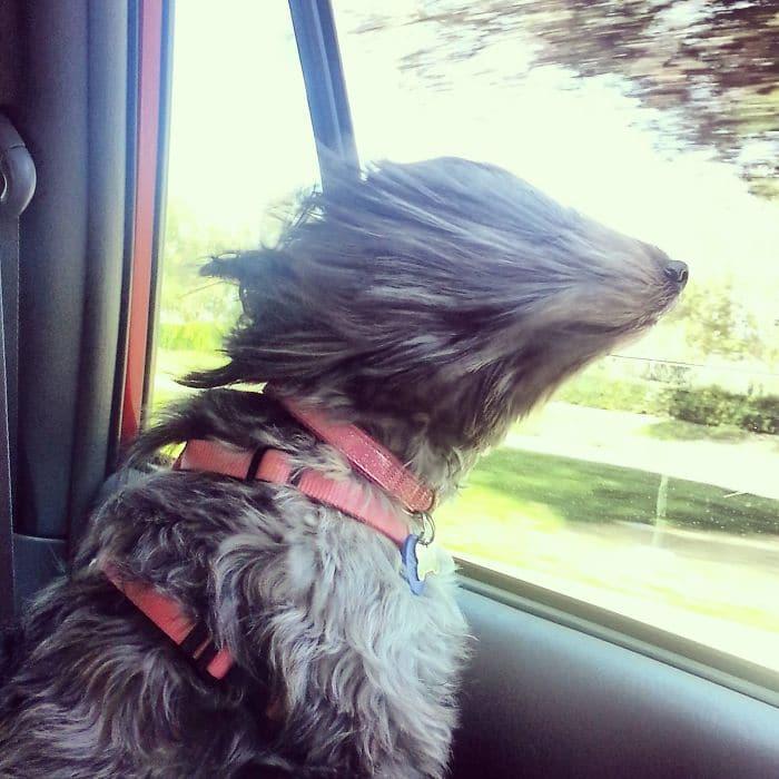пес выставил морду в окно авто