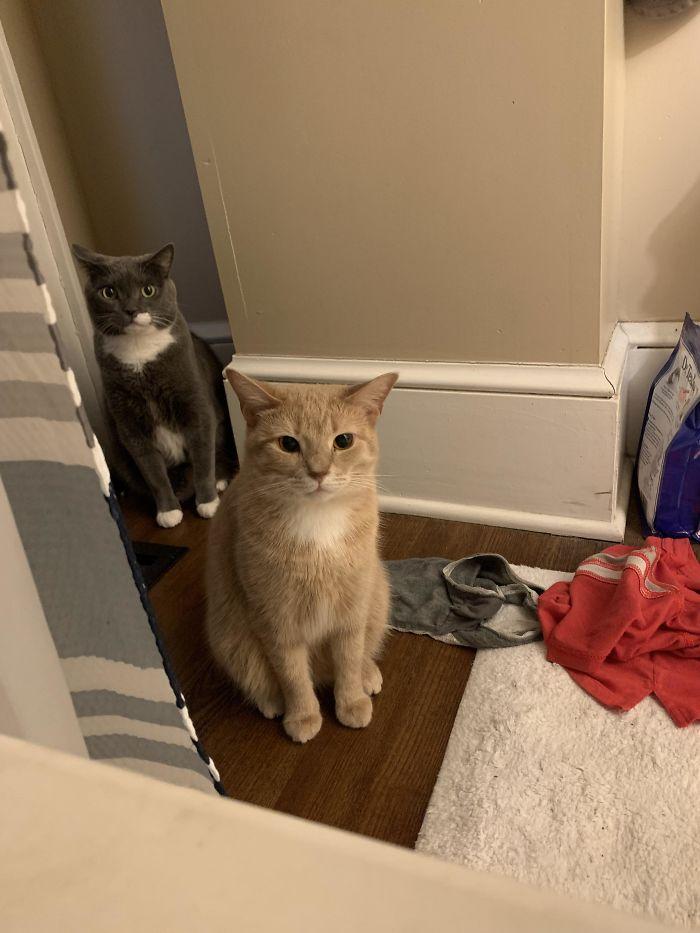 16 раз, когда коты нагло вмешивались в личное пространство хозяев, и не каялись Жизнь,Приколы,ванна,ванная комната,коты,кошки