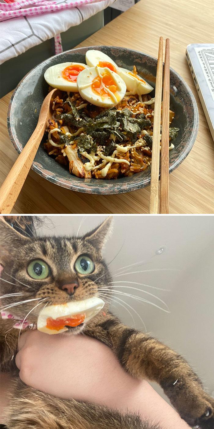 полосатый кот с яйцом во рту