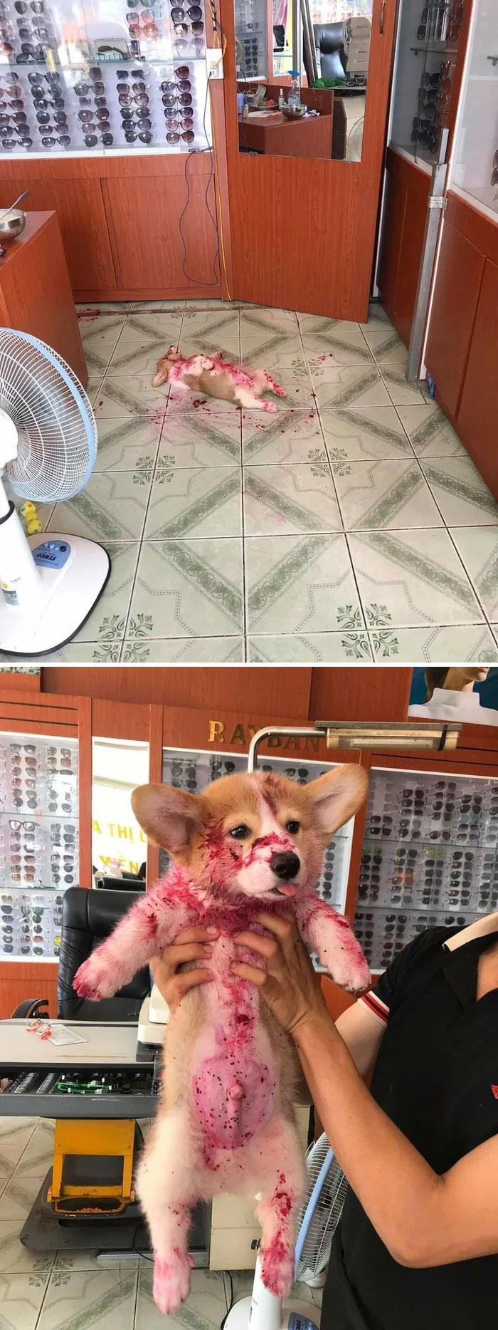 щенок в клубничном джеме