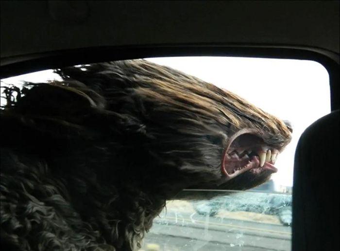 собака высунула морду в окно авто
