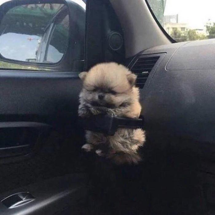 щенок в подставке для кофе в авто