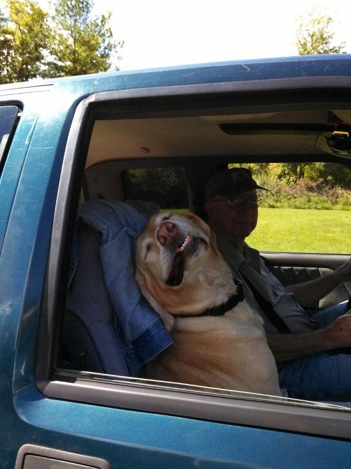собака улыбается на пассажирском сидении в авто